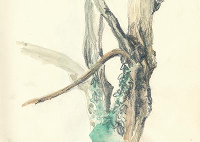 Une histoire d'arbres